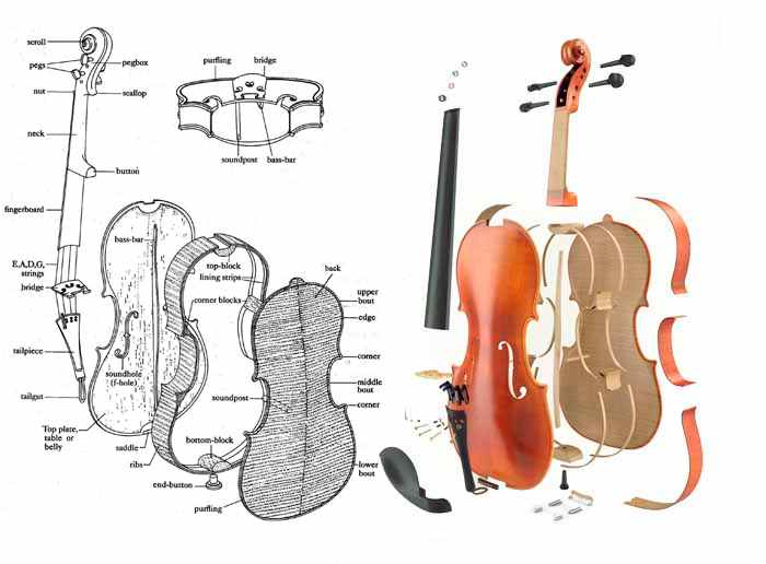 violin alphabet details and parts of stringed instruments